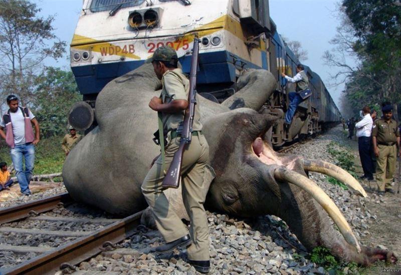 Индийский поезд сбил насмерть пятерых слонов