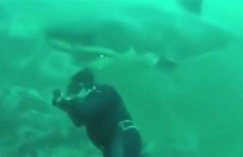 ШОК: Белая акула чуть не откусила голову водолаза