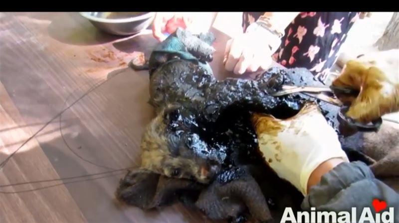 Волонтеры спасли щенков, застрявших в застывшем дегте