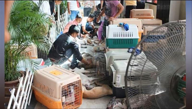 ШОК: порядка 30-ти собак погибли от удушья и перегрева в фургоне