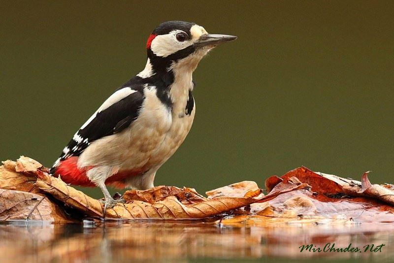 Птицей года в Казахстане объявили дятла