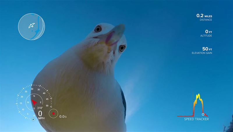 ВИДЕО: Камера, украденная чайкой, нашлась через полгода