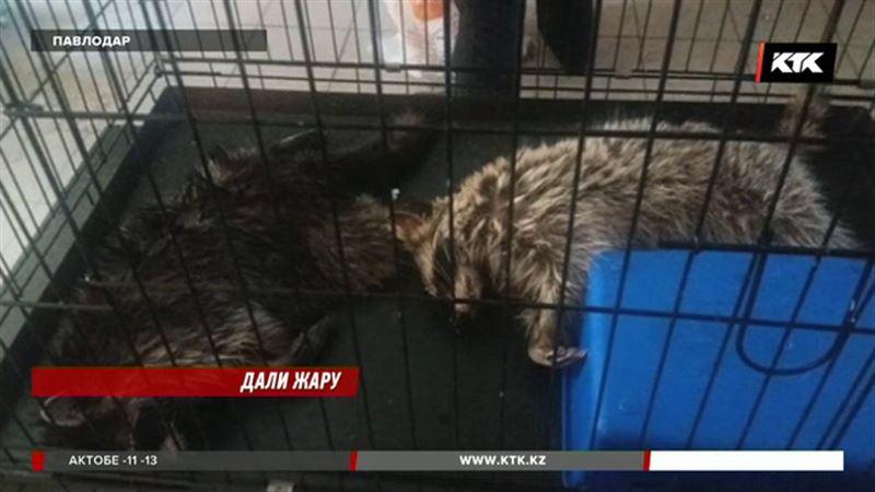 В павлодарском зоопарке заживо сварились десятки животных