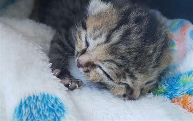 ВИДЕО: В ЮАР родился котенок с двумя мордочками