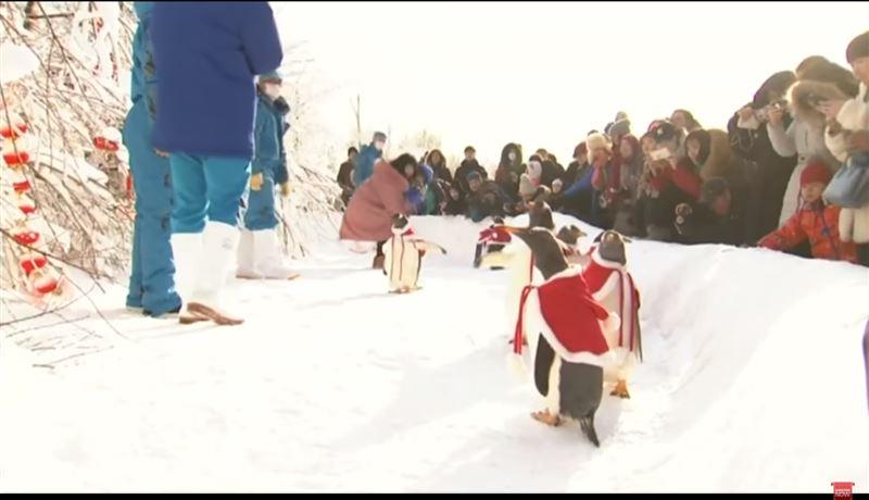Пингвины в костюмах Санта Клауса позабавили посетителей зоопарка
