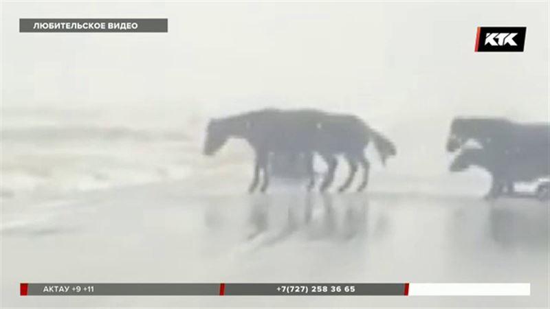 Даже лошади и верблюды не могут противостоять гололеду