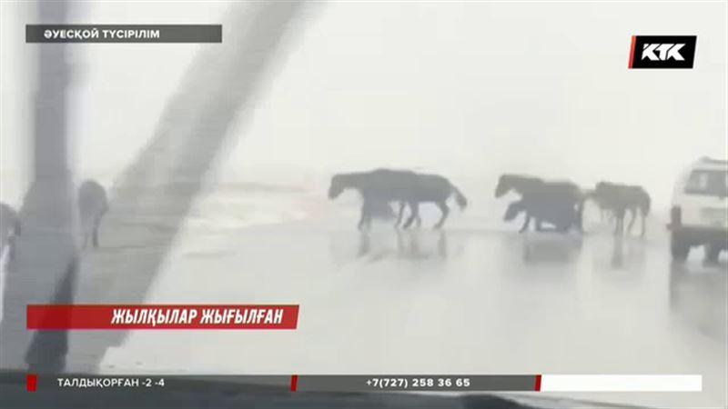 Қарағанды облысында бір үйір жылқы жолдың ортасына жатып алды