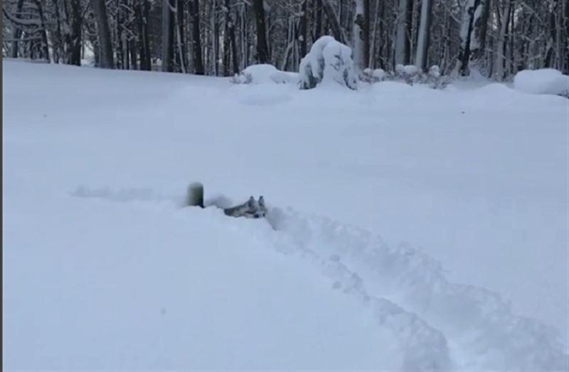 На Рождество в американском штате выпало больше метра снега