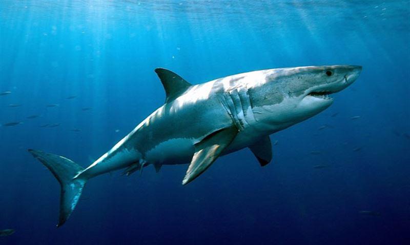 ВИДЕО: Рыбак, спасая акулу, едва не остался без руки