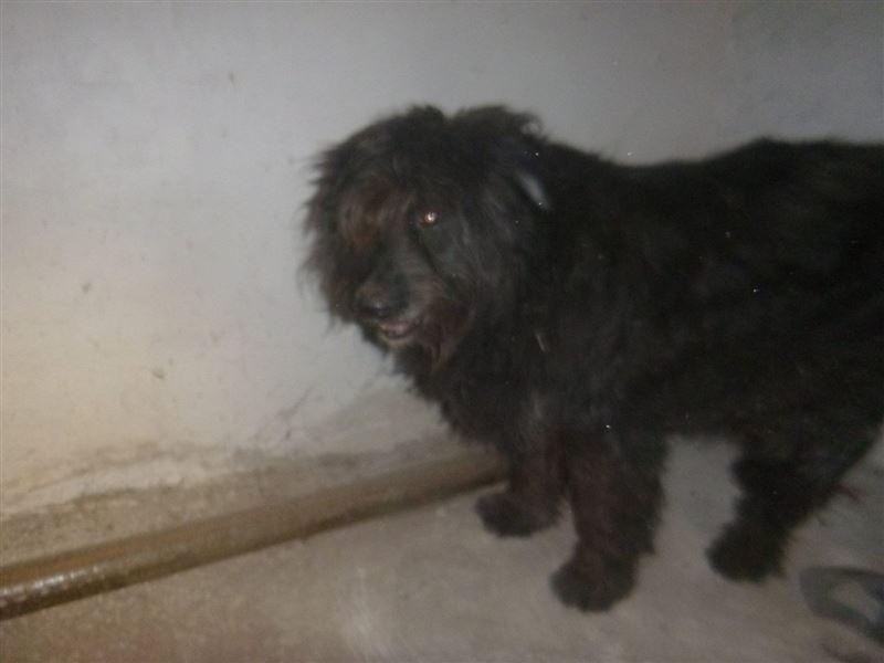 ШОК (18+): В Новый год неизвестные петардой взорвали собаку