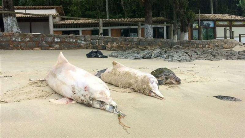 88 тел мертвых дельфинов обнаружено у берегов Рио-де-Жанейро