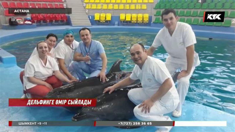Астаналық дәрігерлер алғаш рет дельфинді ажалдан аман алып қалды