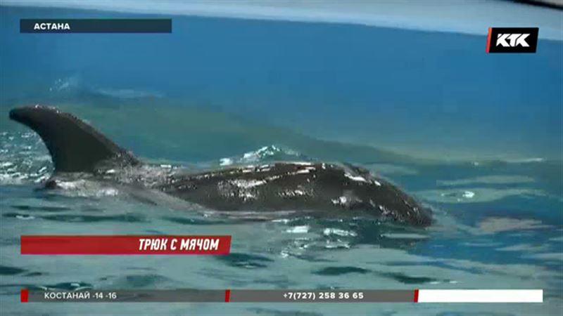 Столичные врачи спасли дельфина
