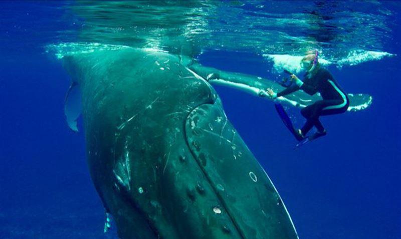 ВИДЕО: Кит в Тихом океане спас женщину от акулы