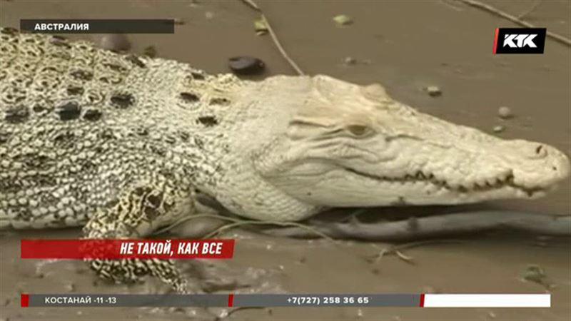 Туристы увидели в австралийской реке крокодила-альбиноса