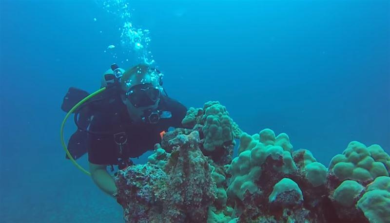 Дайвер запечатлел на видео метаморфозы испуганного осьминога