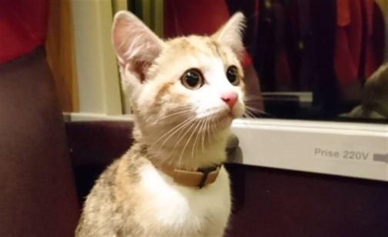 Во Франции котенок вернулся к хозяйке на поезде