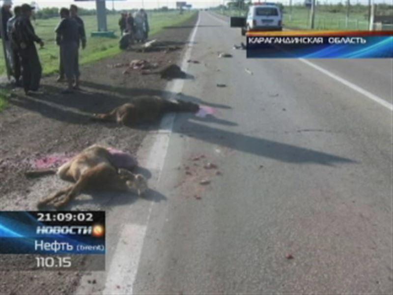 В Жамбылской области под колесами «КамАЗа» погибла женщина