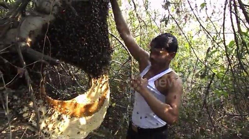 ВИДЕО: Мужчина голыми руками кладет пчел под футболку