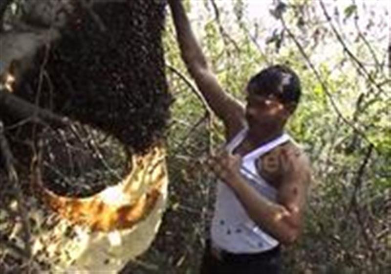 Видео: Жалаң қолымен араларды жейдесінің ішіне салады
