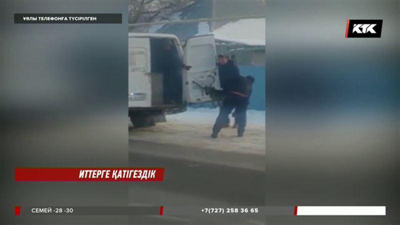 Алматы облысында иттерді жауыздықпен аулаған ер адамдар жұрттың ашуын туғызды