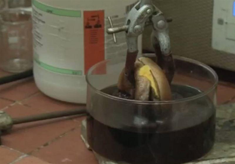 ВИДЕО: Ғалымдар гамбургер жегенде асқазанда қандай өзгеріс болатынын анықтады