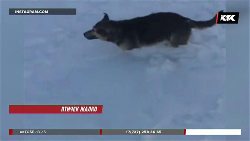 Депутатов напугали замёрзшие от холода животные