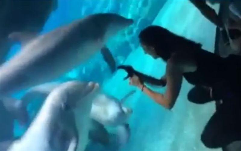 ВИДЕО: Бір топ дельфин бойжеткеннің протезіне көзі түсті