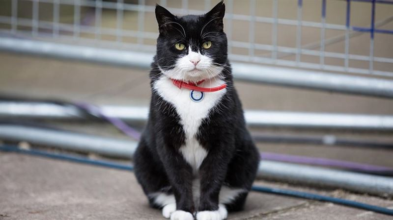 МИД Британии запретил кормить кота Палмерстона