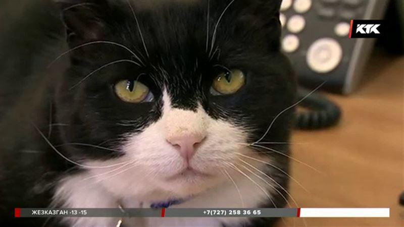 Британский кот-«дипломат» отказался ловить мышей