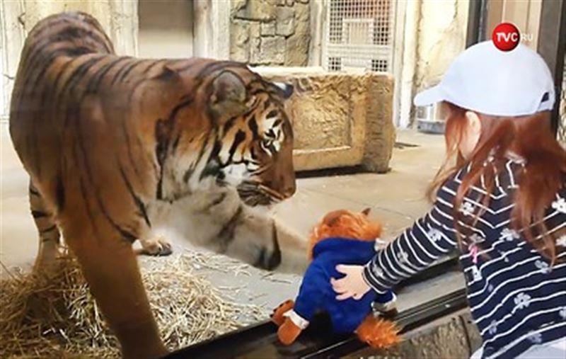 Тигр в зоопарке попытался украсть игрушку у девочки