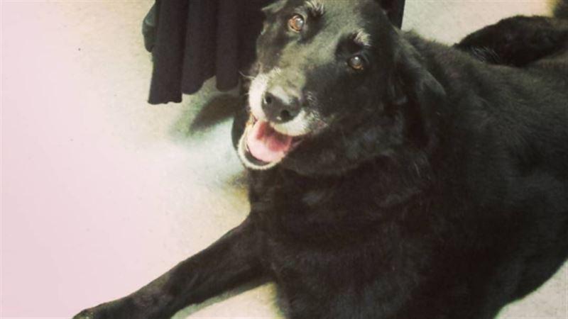 Собака вернулась домой спустя десять лет после пропажи