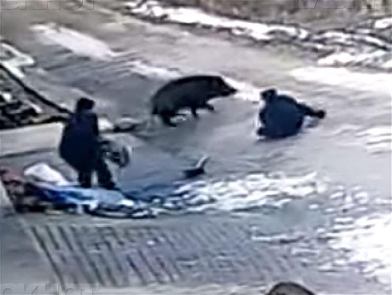 Жуткие кадры: Дикий кабан забил до смерти 66-летнего мужчину