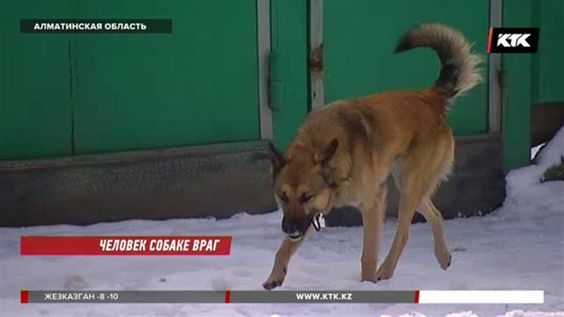 Во дворе школы в Алматинской области бродячие собаки напали на ребенка