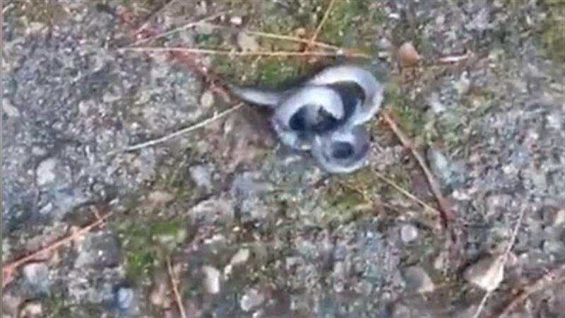 Шокирующее видео: В Китае нашли двухголовую змею