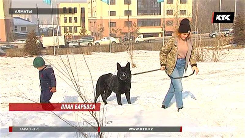 Алабаям разрешат гулять по Алматы без намордника, а фокстерьерам – нет
