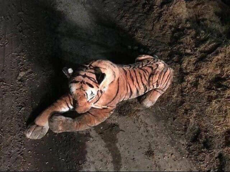 Полицейские час не выходили из автомобиля, испугавшись игрушечного тигра