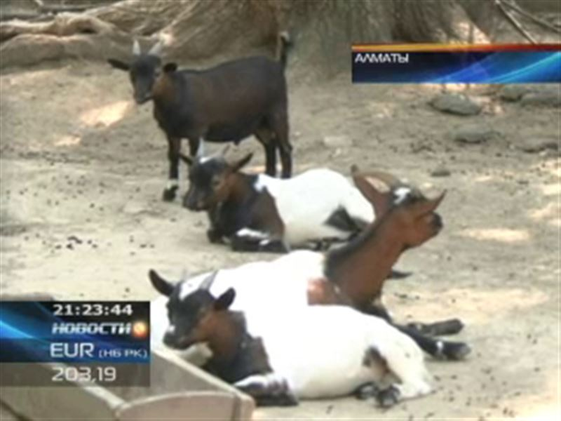 Небывалый приплод у копытных в алматинском зоопарке