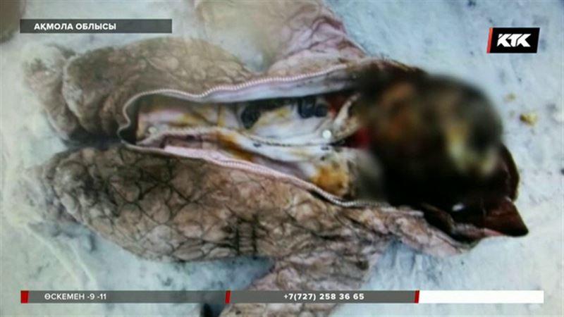 Ақмола облысында құдықтан нәрестенің өлі денесі табылды