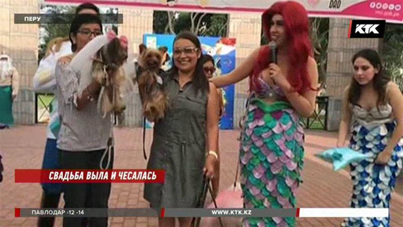В Перу десять собачьих пар оформили отношения