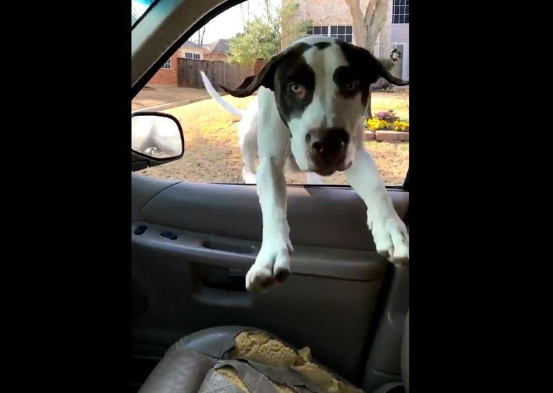 Пользователей Сети позабавила «космическая» скорость собаки