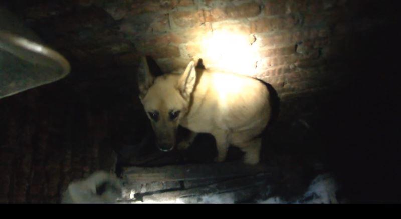 В Перми прошла операция по спасению собаки, четыре дня просидевшей в яме
