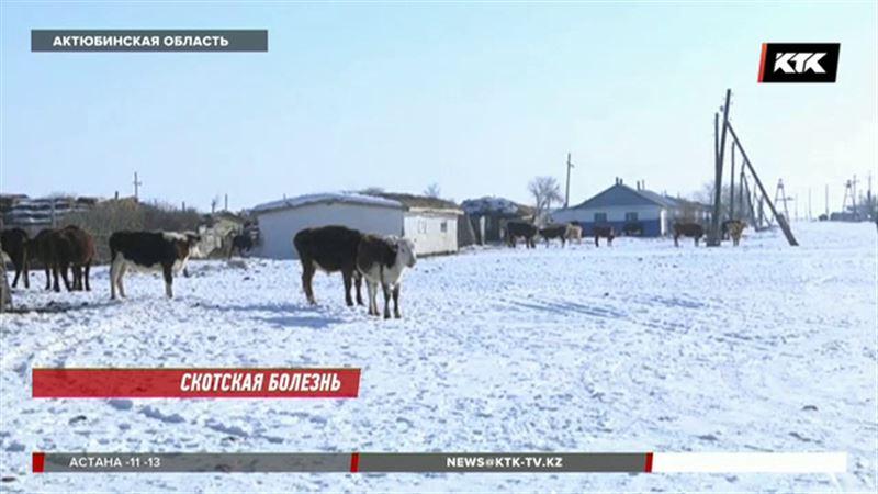 Инфекция оставила актюбинских сельчан без коров