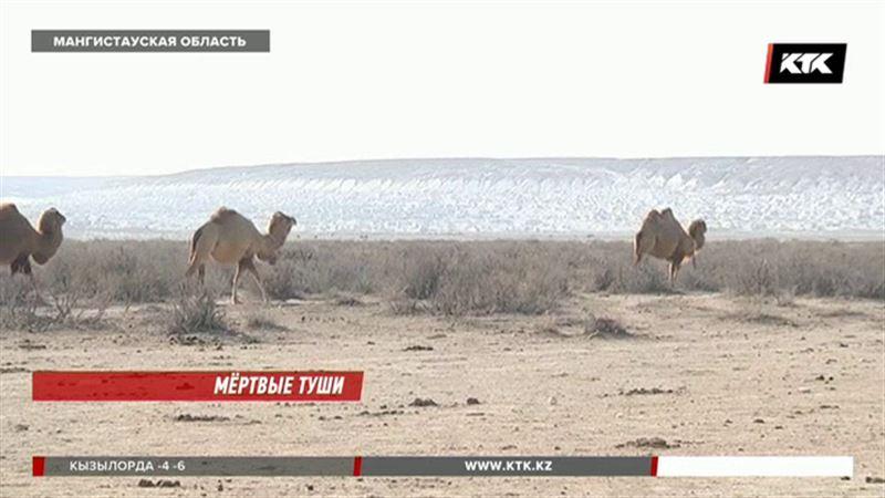 Карантин объявлен в селе, где массово гибнут лошади и верблюды