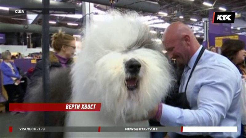 В США выбирают лучшую собаку в мире