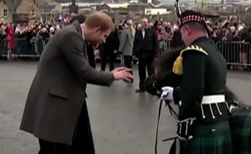 ВИДЕО: Наглый пони покусал принца Гарри на публике