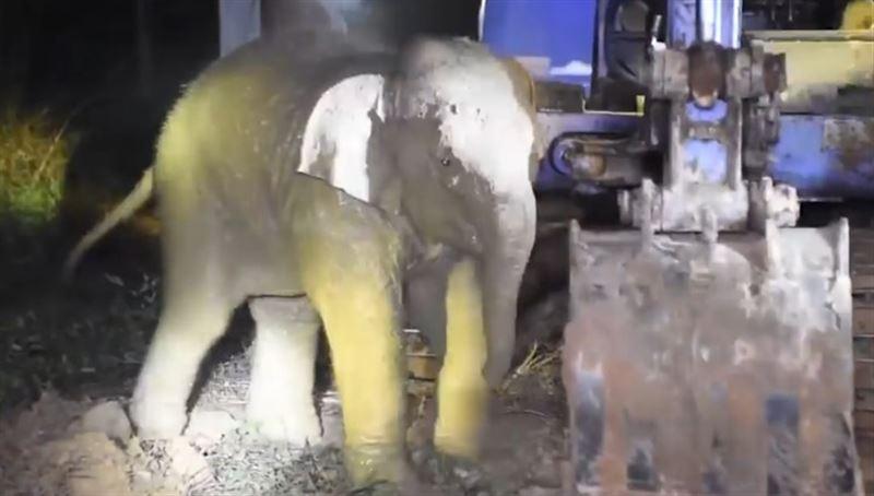 Видео: В Таиланде спасли упавшего в колодец слоненка