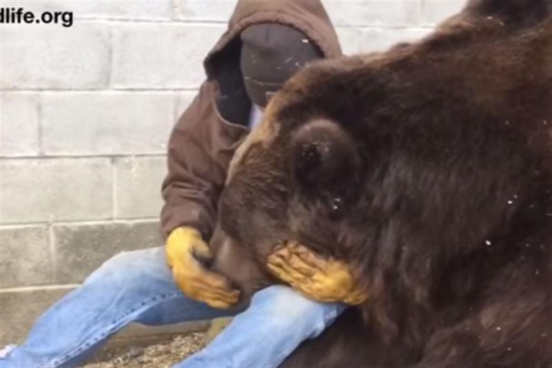 В Сети опубликовано видеопособие, как утешить грустного медведя
