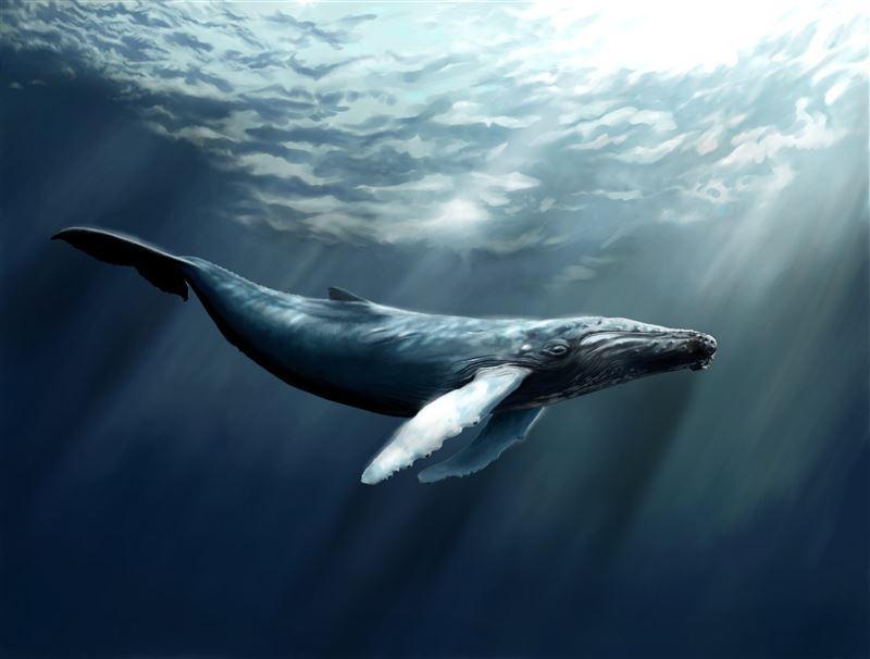 Жители Чили выцарапали надписи на туше мертвого кита и сделали с ним селфи