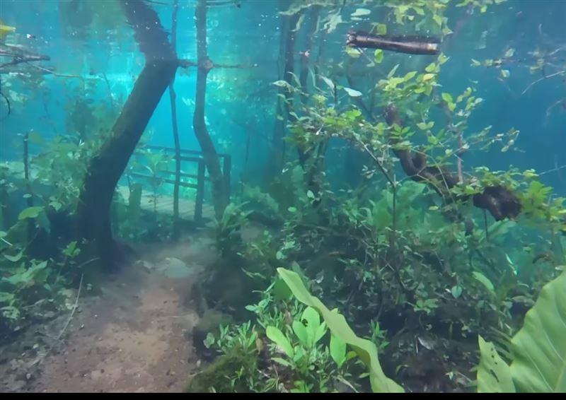 Экскурсовод запечатлел на видео удивительные кадры затопленных джунглей